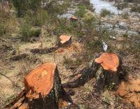 Invitan a un conversatorio virtual sobre tala ilegal en Bariloche