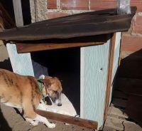 """""""Un techo sobre sus cabezas"""": Construye cuchas para perros que se encuentran a la intemperie"""