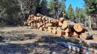 [AUDIO] Proyecto de ley sobre delitos ambientales