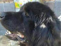 Mató a patadas a un perro en pleno centro de General Roca