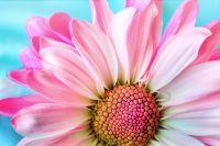 Aceites esenciales para los amantes de las flores