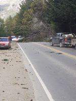 El fuerte viento provocó caída de árboles y voladuras de techos en distintas zonas de la ciudad