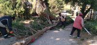 La Subsecretaría de Protección Civil coordina las tareas ante el temporal de viento