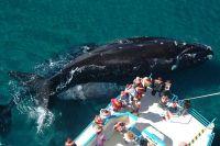 E-Whale: la plataforma colaborativa para aportar datos de la fauna marina de Río Negro