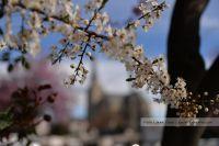 Comienza la primavera en Bariloche: El tiempo para los próximos días